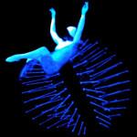 dance evolution anemone